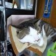 かごの中で寝るレオの寝顔