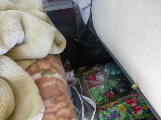 屋上の倉庫に隠れているレオを発見
