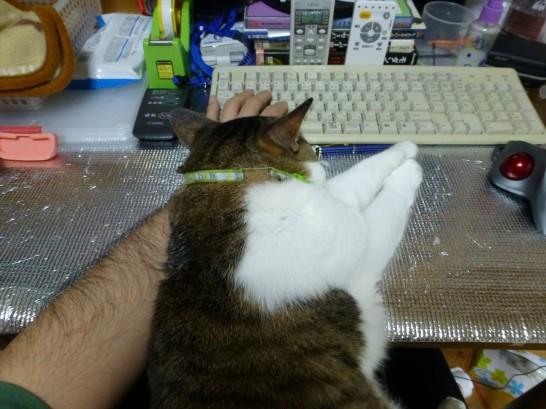 私の膝の上で腕に寄りかかるレオ