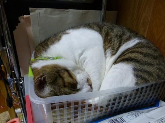 かごで丸まって寝るレオを横から撮影