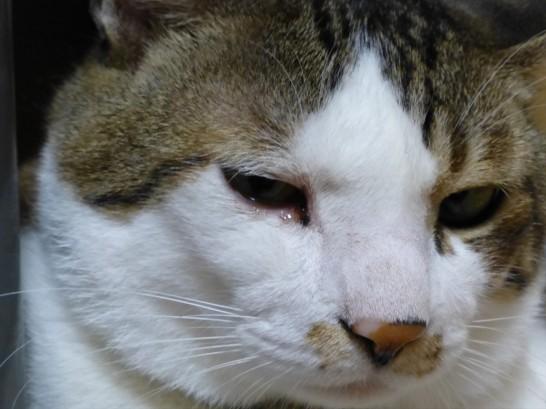 涙目のレオ