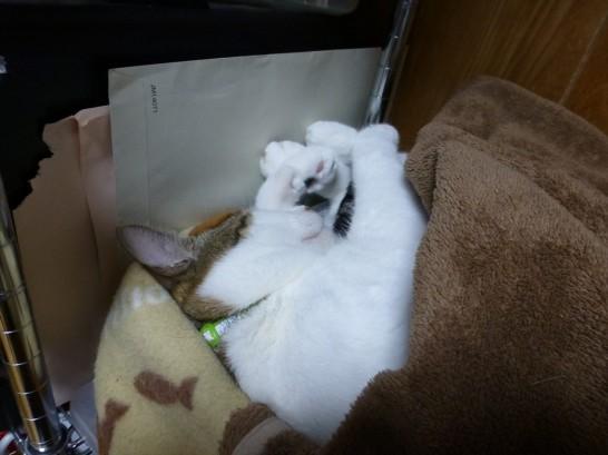 かごで寝るレオ(14/10/09)