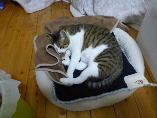 ホットマットで寝るレオ(2014:10:30 03:11:34)