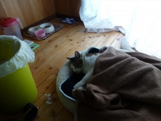 ホットマットで寝るレオ(2014:10:30 08:12:09)