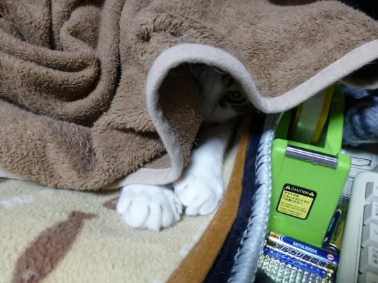 つめを出した手を外に出して毛布の中に潜むレオ2014:11:13 19:48:52