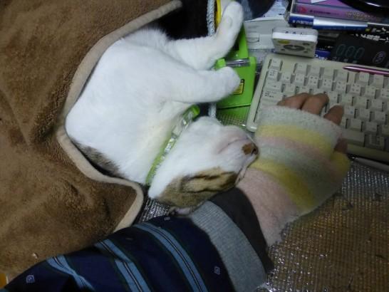 寝床からはみ出して寝るレオ