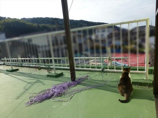 屋上から景色を眺めるレオ2