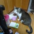 猫貴族を食べるレオ