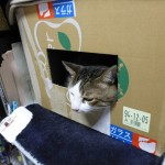 母の日のリースの空き箱に入っていたレオの写真色々