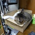 最近のレオはアマゾンの段ボール箱で寝る