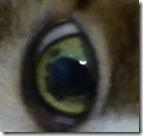 レオの目に染みができて心配。