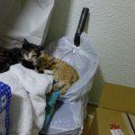 軟膏塗布&捨て猫