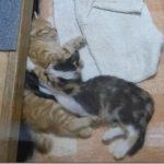 保護した子猫達 その3【お風呂に入れた】