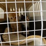 子猫達を再度健康診断【セカンドオピニオン】