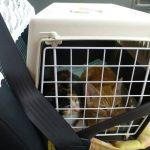 保護した子猫達にエイズと白血病の検査とワクチン接種をしてきた
