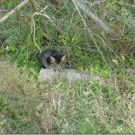 迷子(?)の子猫