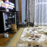 子猫達を屋内に入れて見た