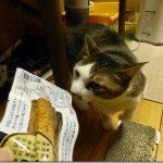 うちの猫達の記録【2017/01/20~2017/01/21】