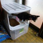 ダイニングテーブル下の猫達のトイレを変更