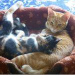 今日の猫達の写真【2017/04/15】