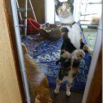 子猫達の部屋の入口をワイヤーネットからアクリル板にしてみた結果