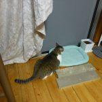 【2017/07/18】適当に猫達の写真を貼っていく
