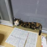2017年8月の猫達の体重測定【追記:18時51分】
