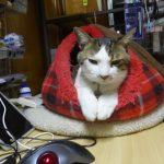 【2017/12/22  1:43】今日の猫達とか日記