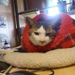 【2017/12/22 18:47】今日の猫達とか日記