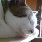 【2018/01/27 14:36】最近の猫達