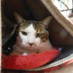 【2018/01/27】レオの猫砂を交換