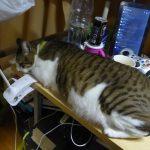 2018年02月の猫達の体重測定【2018/02/04 10:30レオ計測追記】