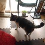 【2018/02/26】レオの猫砂を交換