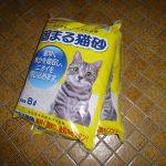 今回買ったコメリの猫砂が一切固まらない件