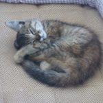 宇土マリーナで保護した子猫マリナ(仮)【追記10:2018年07月11日 22時43分24秒】