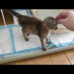 【2018年7月11日】猫たちの動画、主にマリナ