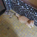 【2018年08月06日 00時36分】今日の猫達