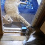 【2018年8月17日】今日の猫達【追記2:2018年08月17日 23時59分】