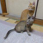 【2018年8月31日】今日の猫達【追記:おまけ動画】