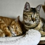 【2018年10月27日】今日の猫達