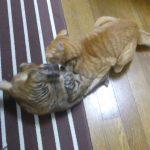 【2018年12月28日】今日の猫達