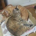 【2019年1月19日】今日の猫達