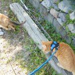 【2019年3月27日】今日の猫たち