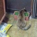 【2019年4月4日】今日の猫達