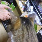 【2019年6月18日】今日の猫達