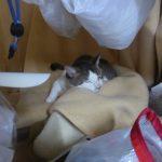 【2019年7月1日】今日の猫達