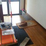【2019年7月28日】猫砂の交換&最近の猫達の写真