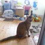マリナ似の野良猫