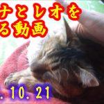 【2019年10月22日】今日の猫たち