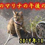 【2019/10/11】マリナだけ午後のおさんぽetc.